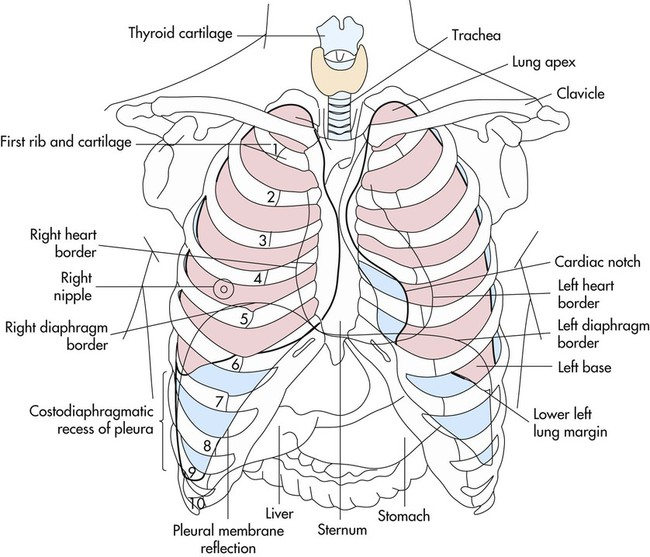 Diagram Of Liver And Rib Cage Choice Image - How To Guide ...
