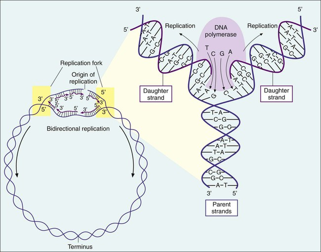 Bacterial Genetics, Metabolism, and Structure | Clinical Gate