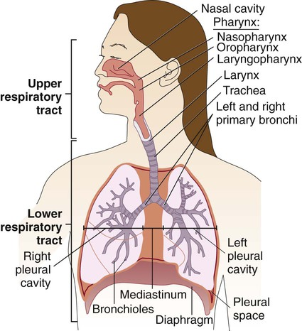 Infections Of The Lower Respiratory System Clinical Gate