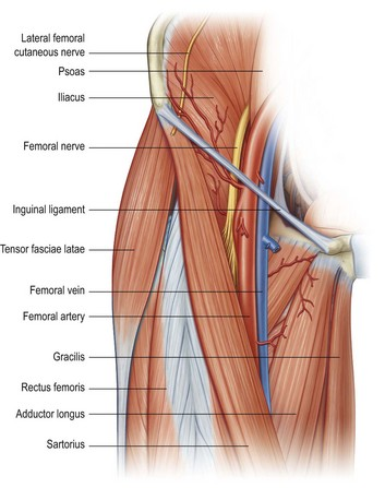 lower limb blocks | clinical gate, Muscles