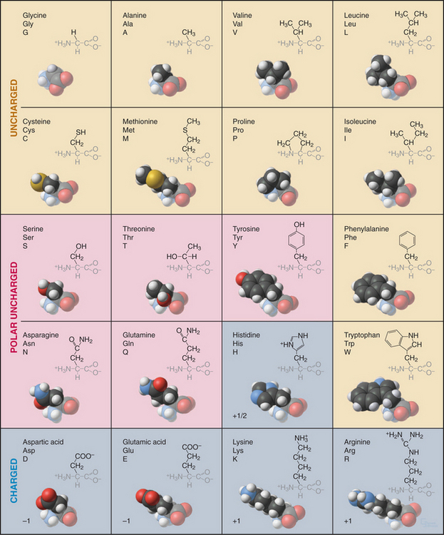 20 Amino Acid One Letter Code.Molecules Structures And Dynamics Clinical Gate