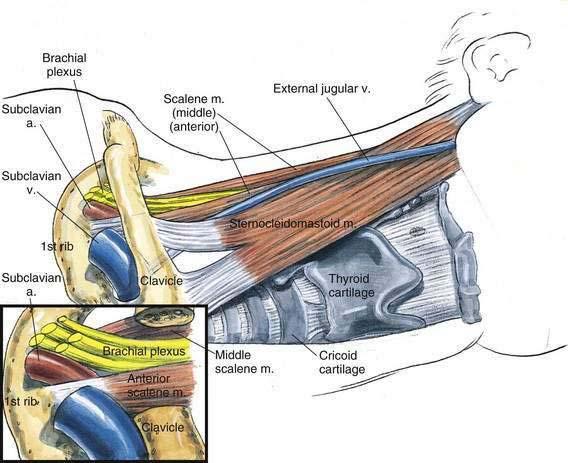 Supraclavicular Block | Clinical Gate