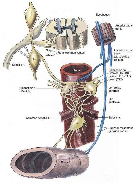 Celiac Plexus Block Clinical Gate