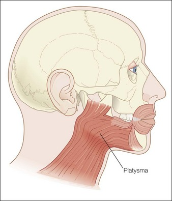 platysma and the nefertiti lift® | clinical gate, Skeleton