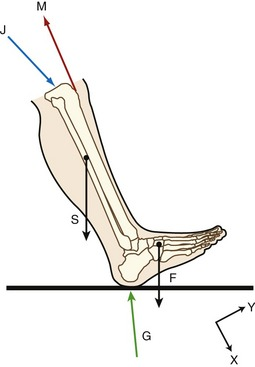 Biomechanical principles clinical gate free body diagram of the shank and foot at the instant of heel contact during walking the segment is isolated by figuratively cutting through the knee ccuart Image collections