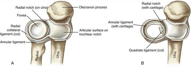 Proximal Radioulnar Joint