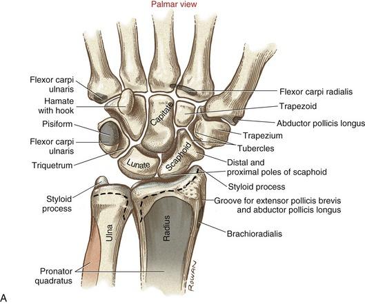 Wrist | Clinical Gate