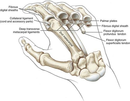 Hand | Clinical Gate