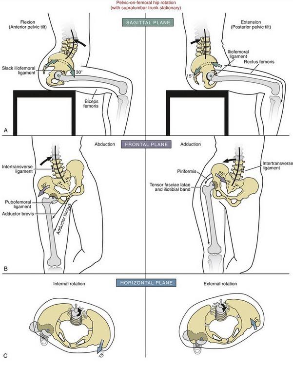 Hip   Clinical Gate
