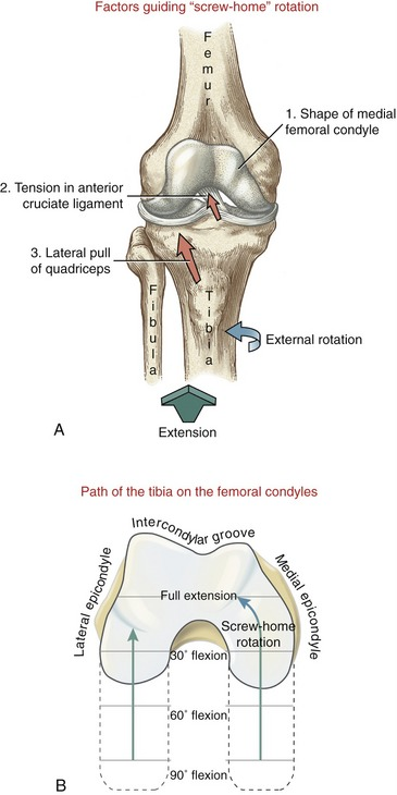 Knee clinical gate the screw home locking mechanism of the knee a during terminal tibial on femoral extension three factors contribute to the locking mechanism of the ccuart Image collections
