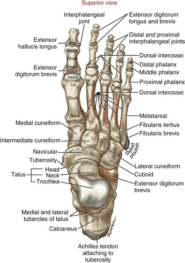 joints of the foot - Ukran.soochi.co