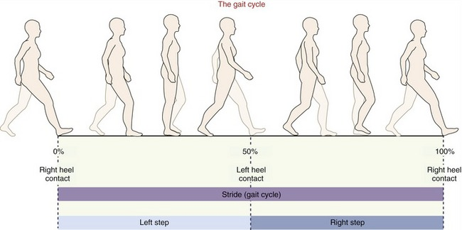 Kinesiology of Walking   Clinical Gate