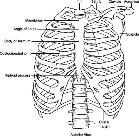 Pertinent surgical anatomy of the thorax and mediastinum image figure 2 bony chest wall ccuart Choice Image