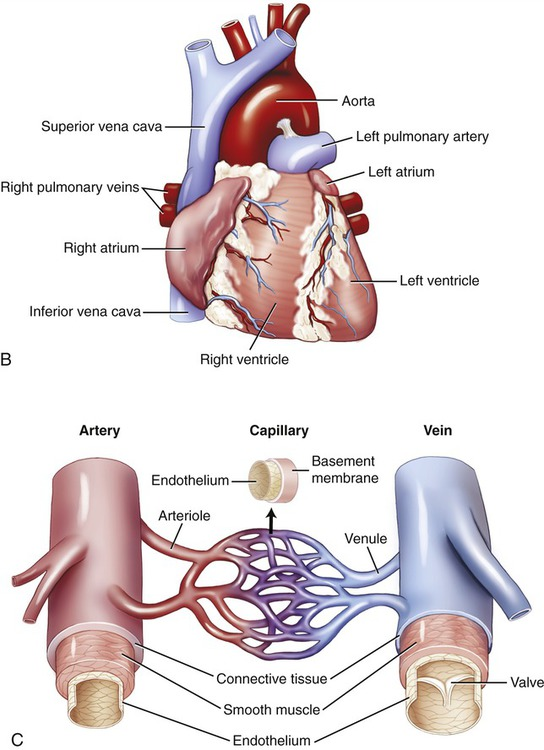 Infections of the Circulatory System | Clinical Gate