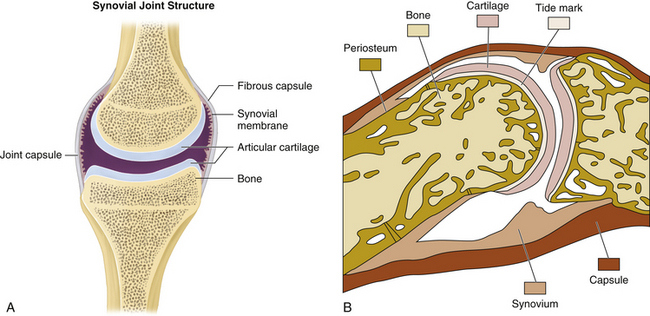ANATOMY OF JOINTS, GENERAL CONSIDERATIONS, AND PRINCIPLES OF JOINT ...