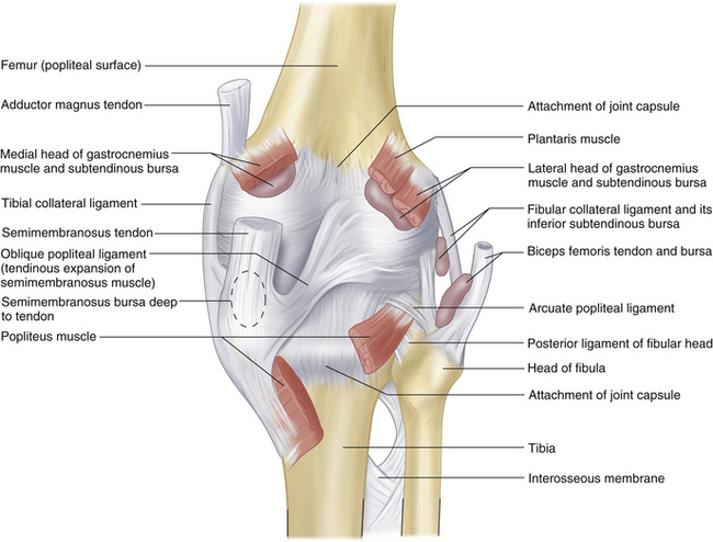 THE KNEE | Clinical Gate