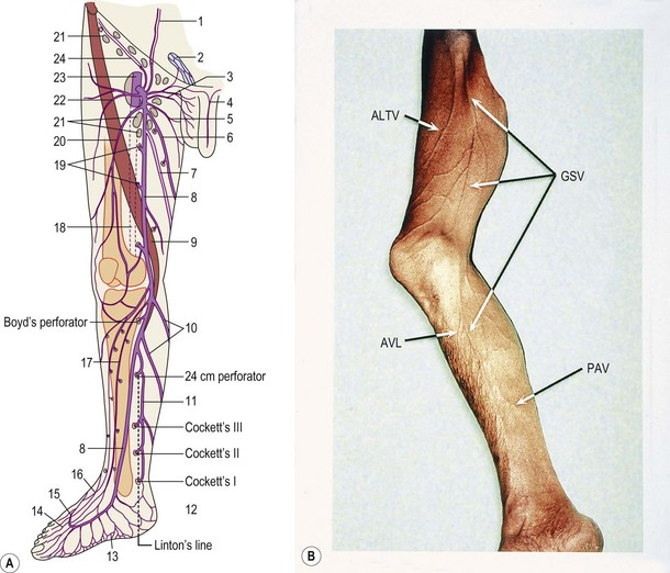 Anatomy Clinical Gate