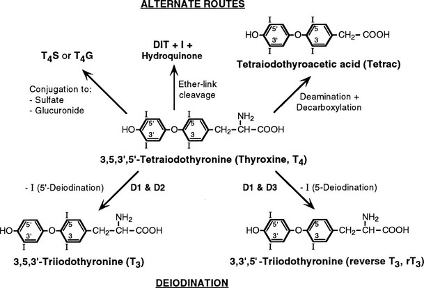 Thyroid Hormone Metabolism Clinical Gate