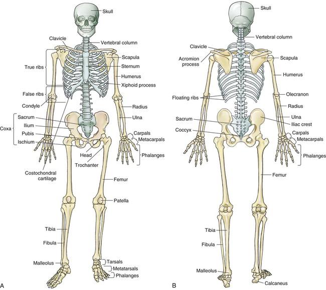 Appendicular Skeleton Labeling Worksheet | ABITLIKETHIS