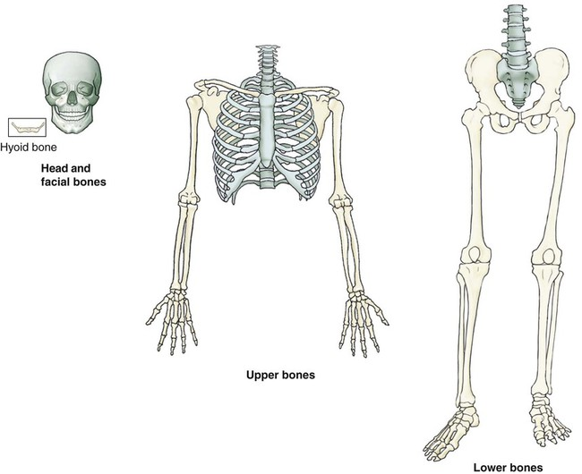 3 Skeletal Bones Divided By ICD 10 PCS Classifications