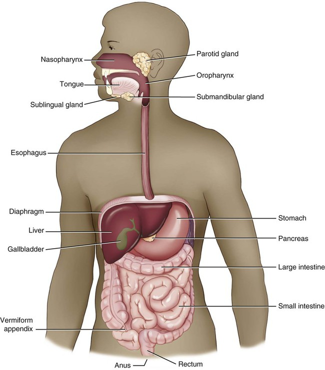 Digestive System | Clinical Gate