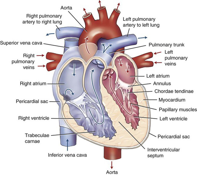 Circulatory System | Clinical Gate