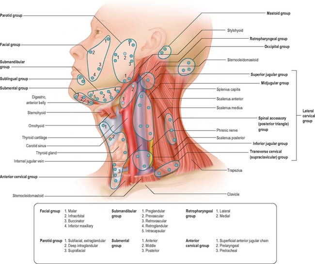 Head And Neck Overview And Surface Anatomy Clinical Gate