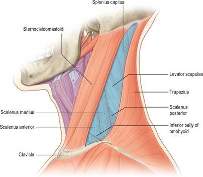 aspecifieke lage rugpijn