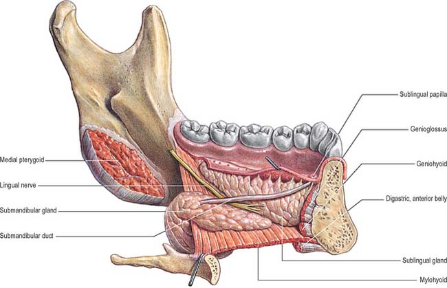 Image gallery sublingual anatomy for Floor of mouth anatomy
