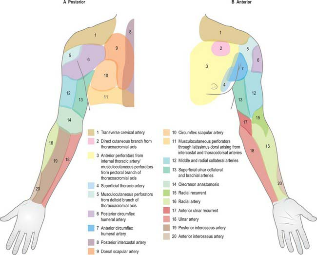 Pectoral girdle and upper limb: overview and surface anatomy ...