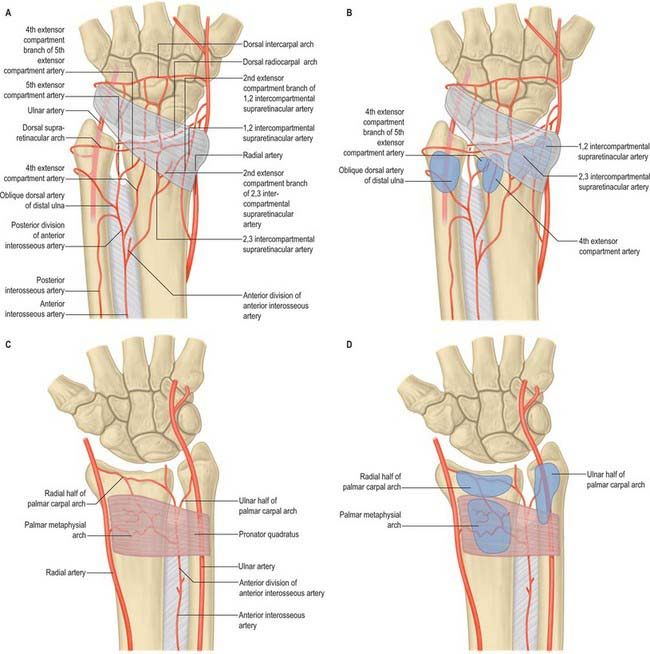 Forearm Clinical Gate