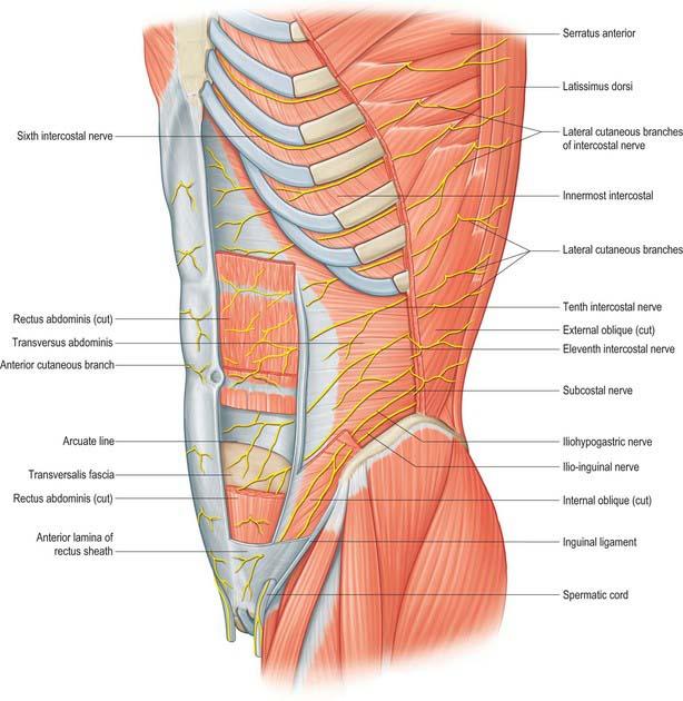 Anterior Abdominal Wall Clinical Gate