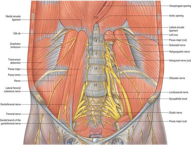 Posterior Abdominal Wall And Retroperitoneum Clinical Gate