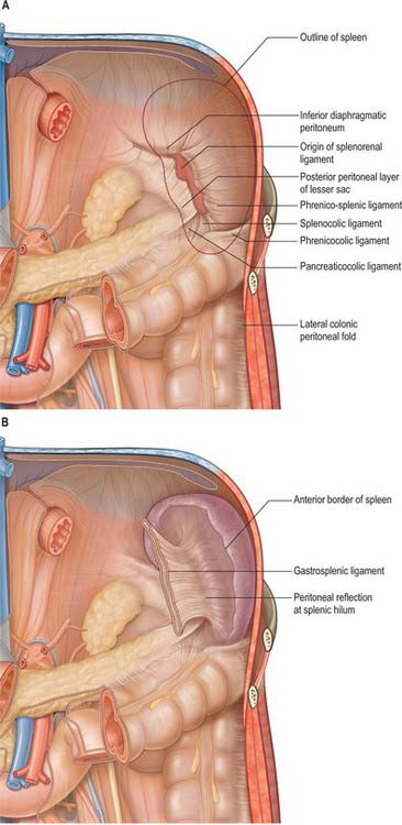 Spleen | Clinical Gate