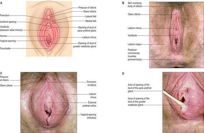 Cyst above the clitoris