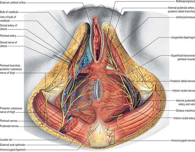 Female Reproductive System Clinical Gate
