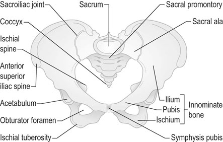 Anatomy Of The Female Pelvis Clinical Gate