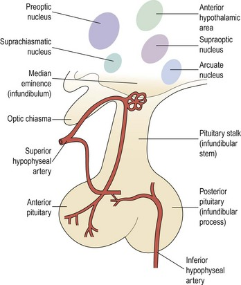 Control of hypothalamic–pituitary–ovarian function