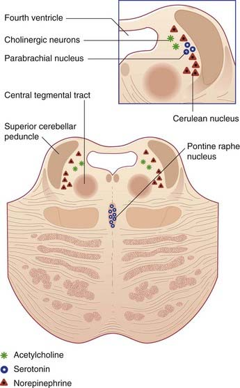 reticular formation function