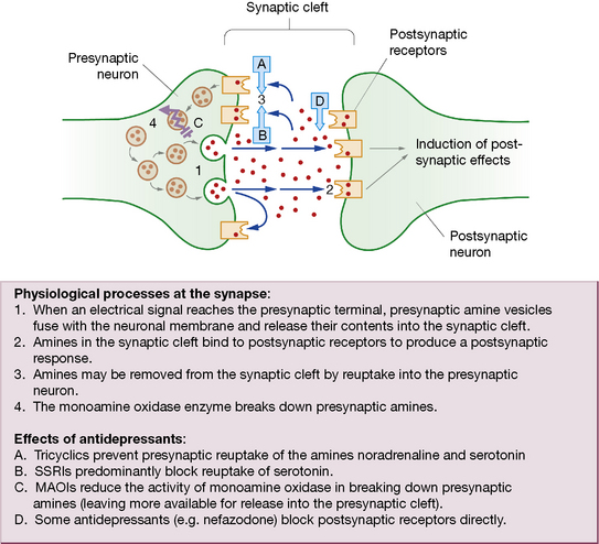drug interactions on synapse essay Synaptic transmission and how drugs may modify this activity essaysdiscuss the mechanism of synaptic transmission and how drugs may modify a chemical synapse.