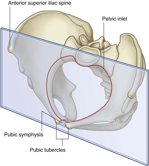 Pelvis And Perineum Clinical Gate