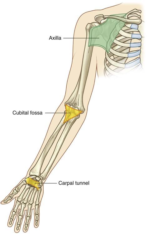 Upper Limb Clinical Gate