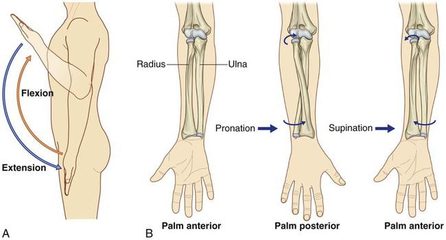 Wrist Joint Stock Illustration - Image: 46887346