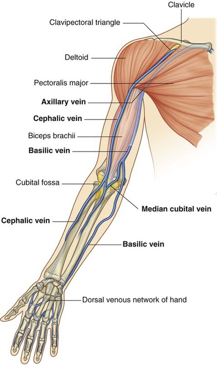 upper limb | clinical gate, Cephalic Vein