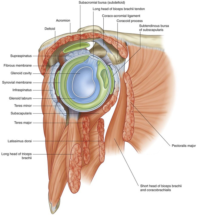 Upper Limb | Clinical Gate