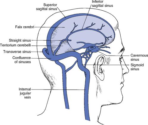 Diagram Of Dural Venous Sinuses - Trusted Wiring Diagram •