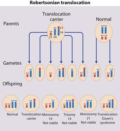 The inheritance of loss summary