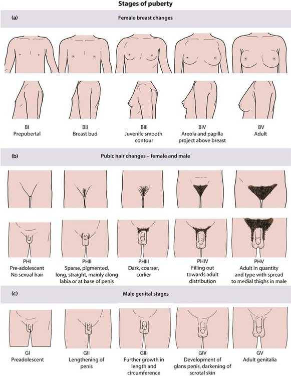 Puberty Chart Mersnoforum