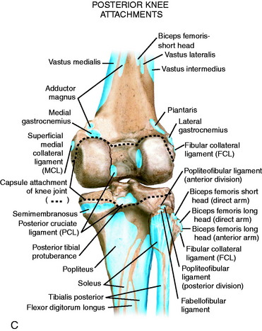 Lateral posterior and cruciate knee anatomy clinical gate figure 2 1 a bony anatomy of the posterior knee joint b bony anatomy of the lateral knee joint c key anatomic attachments of the posterior aspect of ccuart Gallery