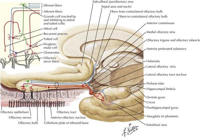 Cranial Nerve I Clinical Gate